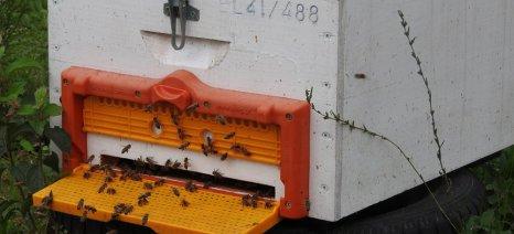 Στην Κοζάνη το Μελισσοκομικό Κέντρο Δυτικής Μακεδονίας