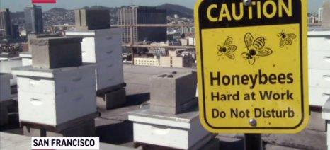 Μελίσσια και παραγωγή μελιού στις ταράτσες του Σαν Φρανσίσκο