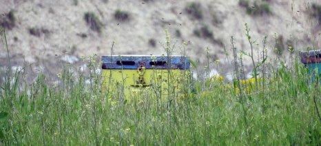 Ενίσχυση ύψους 1,2 εκατ. ευρώ σε μελισσοκομικούς συνεταιρισμούς των νησιών του Αιγαίου