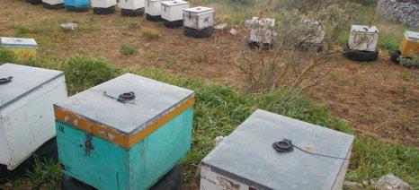 Χιλιάδες μελίσσια παρέσυραν τα ορμητικά νερά στην Άρτα