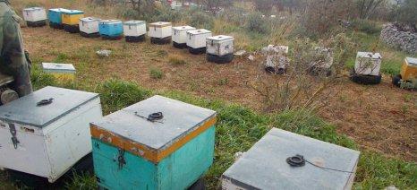 Δανέλλης: «Υπό απειλή ο μελισσοκομικός κλάδος στην Κρήτη και στην υπόλοιπη χώρα»