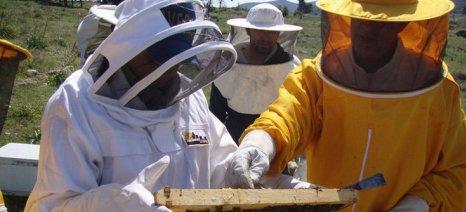 Εκπαιδευτική ημερίδα του Μελισσοκομικού Συλλόγου Κεντρικού Έβρου την Παρασκευή