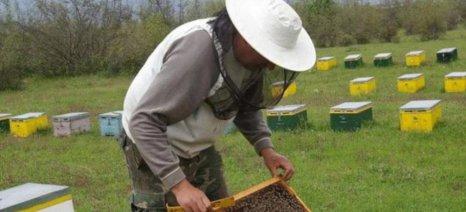 Τριήμερο σεμινάριο μελισσοκομίας στη Ζάκυνθο από 12 έως 14 Οκτωβρίου