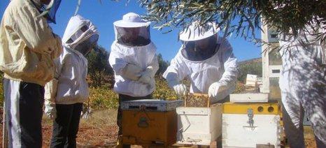 Απρίλιος: Η πιο πλήρης μελισσοκομική περίοδος σε εργασίες