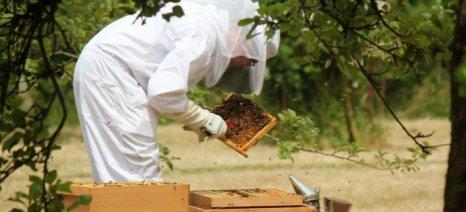 Κατανομή επιχορήγησης 1,1 εκατ. ευρώ σε 15 Κέντρα Μελισσοκομίας