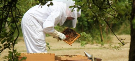 Οι ειδικότητες σε γεωργία, κτηνοτροφία, μελισσοκομία και αλιεία που επιδοτούνται μέσω του voucher ανέργων