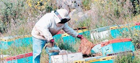 Γενική συνέλευση και εκλογές στην Ομοσπονδία Μελισσοκομικών Συλλόγων Ελλάδας στις 10 Φεβρουαρίου