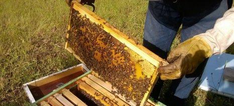 Περίπου 1500 μελισσοσμήνη έχουν εξαφανιστεί λόγω της κακοκαιρίας στην Αρκαδία στις 25 Ιουνίου
