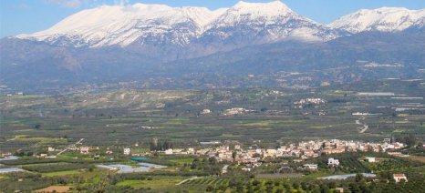 Νέα κρούσματα κλοπής ελαιολάδου στη Μεσσαρά