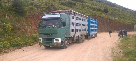 Οι μεγάλες αποστάσεις μεταφοράς των ζώων στο στόχαστρο της Κομισιόν, με νέους κανονισμούς