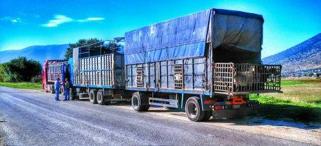 Έκκληση της περιφέρειας Κεντρικής Μακεδονίας για λήψη μέτρων μετά τα κρούσματα αφθώδους πυρετού στην Τουρκία
