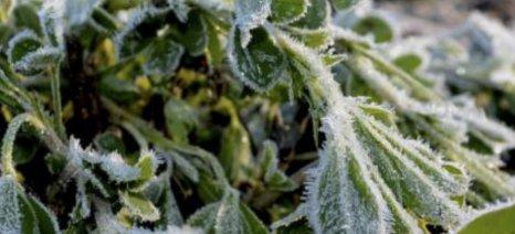 Δηλώσεις ζημιάς από τον παγετό στο Δήμο Αλιάρτου Θεσπιέων έως τη Δευτέρα 23 Ιανουαρίου