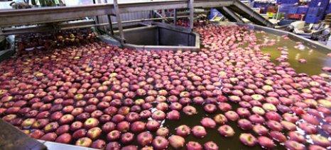 Με μειωμένη παραγωγή ξεκινά η συγκομιδή των μήλων στην Ζαγορά
