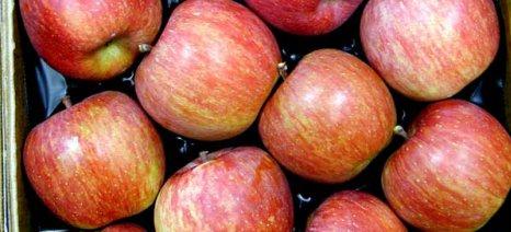 Με ενισχυμένες ποσότητες μήλων συνεχίζονται οι εξαγωγές οπωροκηπευτικών