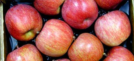 Σε ισχύ η έγκριση εισαγωγών ελληνικών μήλων στην Ινδία