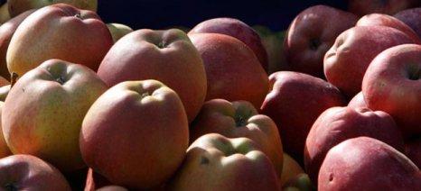 Προσθήκες στον κατάλογο των προωθούμενων ποικιλιών μήλων και ροδάκινων