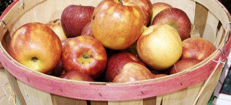 Το 37% των γαλλικών εκμεταλλεύσεων φρούτων βρίσκονται σε οικονομικό κίνδυνο