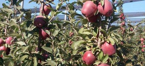 Ημερίδα ΕΛΓΟ Δήμητρα στη Σκύδρα στις 2 Νοεμβρίου για θρέψη-λίπανση οπωροφόρων δέντρων