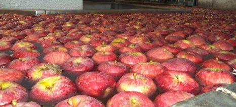 Την ανακατανομή των ποσοτήτων απόσυρσης για τα φρούτα αποφάσισε το υπουργείο