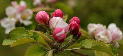 Κόκκινος τετράνυχος, φουζικλάδιο και ωίδιο μηλιάς: Τρόποι αντιμετώπισης