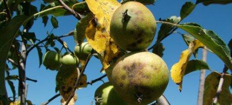 Ο χειμερινός... άτλαντας για τη φυτοπροστασία των μηλοειδών από όλες τις ασθένειες