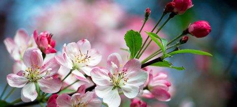 Οδηγίες για την αντιμετώπιση εντόμων και ασθενειών στα μηλοειδή
