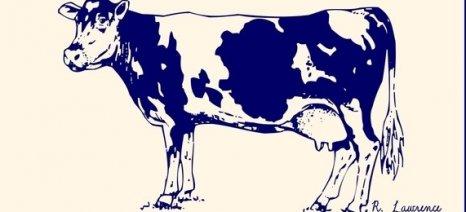 Αιτήσεις για ποσοστώσεις στο αγελαδινό γάλα έτους 2014-2015 έως τις 16 Ιανουαρίου
