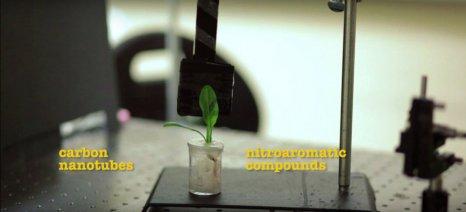 Νανοβιονικό σπανάκι μπορεί να ανιχνεύει εκρηκτικά