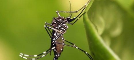 Ξεκίνησε το πρόγραμμα καταπολέμησης κουνουπιών στην Κεντρική Μακεδονία
