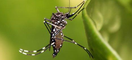 Σε εξέλιξη το πρόγραμμα των ψεκασμών της Κεντρικής Μακεδονίας για την καταπολέμηση των κουνουπιών στην Πιερία