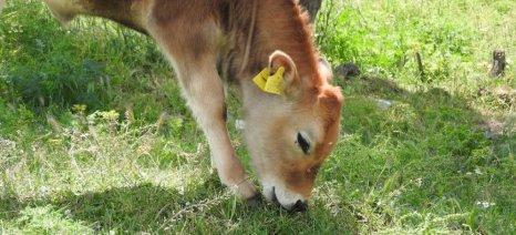 Ενημερωμένη λίστα με τα εγκεκριμένα μέσα σήμανσης βοοειδών, αιγοπροβάτων και χοίρων