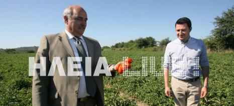 Στα χωράφια της βιομηχανικής ντομάτας στην Ηλεία βρέθηκε ο Μπόλαρης - τι είπε για τον ΕΛΓΑ