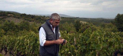 Ο Στέλιος Μπουτάρης ανέλαβε πρόεδρος στην Ένωση Οινοπαραγωγών του Αμπελώνα της Βορείου Ελλάδος
