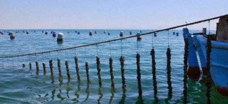 """Ομόφωνο """"όχι"""" από το δημοτικό συμβούλιο Αγιάς για την εγκατάσταση μυδοκαλλιεργειών στην Αλεξανδρινή"""