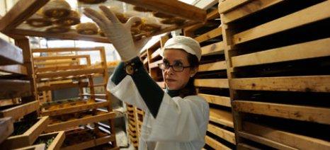 Ξεκινά η παραγωγή προϊόντων οικοτεχνίας από αγρότες - ολόκληρο το κείμενο της Υπουργικής Απόφασης