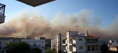 Μεγάλη φωτιά στη Νεάπολη Λακωνίας
