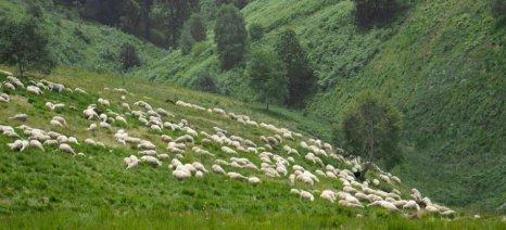 Διάλυση μαφιόζικου κυκλώματος στην Ιταλία που έπαιρνε παράνομα αγροτικές επιδοτήσεις