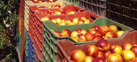 Δηλώσεις παραγωγής για ροδάκινα και νεκταρίνια δέχεται για τη φετινή σοδειά η Fresh Farm