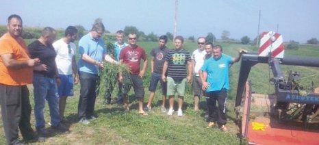 Εκπαίδευση νέων αγροτών στην Κατερίνη για ενσίρωμα καλαμποκιού και κοπή μηδικής