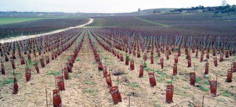 Συνολικά 269.090 στρέμματα πήραν άδεια για φύτευση νέου αμπελώνα στη Γαλλία