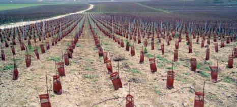 Ανησυχούν οι αμπελοκαλλιεργητές της Ζίτσας - Αποκλείστηκαν πολλοί για άδειες νέας φύτευσης