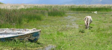 ΟΗΕ: Η γεωργία μπορεί να περιορίσει άμεσα τις εκπομπές διοξειδίου του άνθρακα