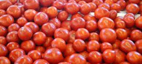 Αύξηση 18,3% στις εξαγωγές οπωροκηπευτικών το 7μηνο