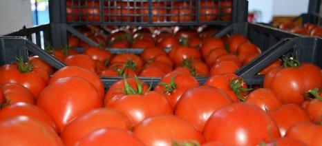 Δεσμεύτηκαν 2,1 τόνοι ντομάτας στη λαχαναγορά του Ρέντη