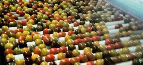 ΙΟΒΕ: Το 65% των επιχειρήσεων μεταποίησης τροφίμων είχαν κέρδη το 2013