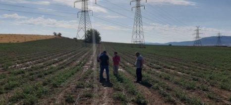 Εκτιμήσεις ζημιάς από τους γεωπόνους της Δ. Νομικός ΑΒΕΚ στα χωράφια με βιομηχανική ντομάτα