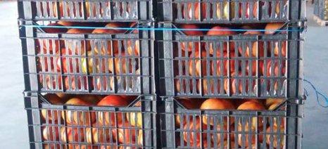 Δέσμευση 12,4 τόνων κηπευτικών από φορτηγό στη Λαχαναγορά του Ρέντη