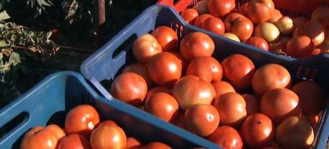 Για Ομάδες Παραγωγών και Leader μίλησε ο Αποστόλου στη Γιορτή της Ντομάτας στην Εύβοια