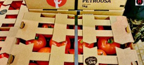 Νέας γενιάς χάρτινο τελάρο για τις ντομάτες της Wonderplant