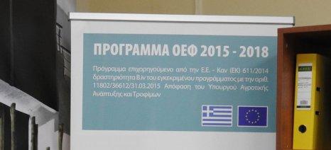 Με ποσόστωση τα κονδύλια για τα προγράμματα των ΟΕΦ - αιτήσεις έως 15 Φεβρουαρίου